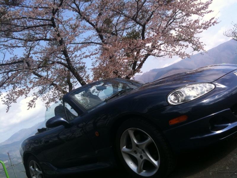 桜、見つけた。
